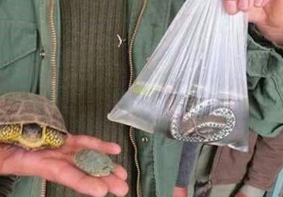 ممنوعیت خرید و فروش گونه های جانوری وحشی