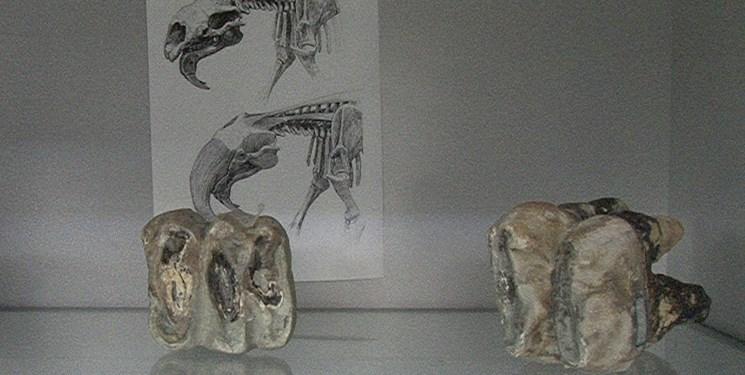 فسیلهای ۱۲ میلیون سال شگفتانگیز مراغه در یک انباری