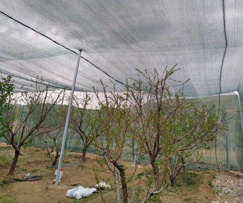 طرح سایهبان باغی به طور آزمایشی در آذربایجان شرقی در دست اجراست
