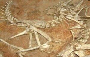 فسیلهای ۷ میلیون ساله، لنگ ۷ میلیارد اعتبار