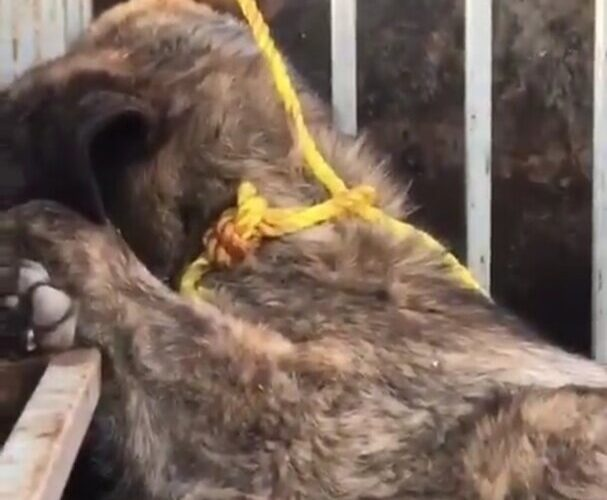 جمعآوری سگهای بلاصاحب مطالبهای مردمی است/ احداث محلی برای نگهداری سگهای بلاصاحب