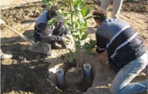 بهره گیری از روش های جدید در سیستم آبیاری فضاهای سبز تبریز
