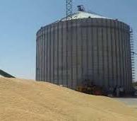 بیش از ۱۰۶ هزار تن گندم در آذربایجانشرقی خرید تضمینی شد